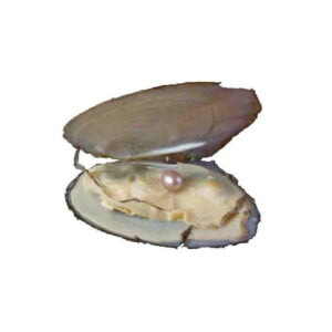 Genuine Pearl Pendant mussel shell A Wish Waiting To Come True